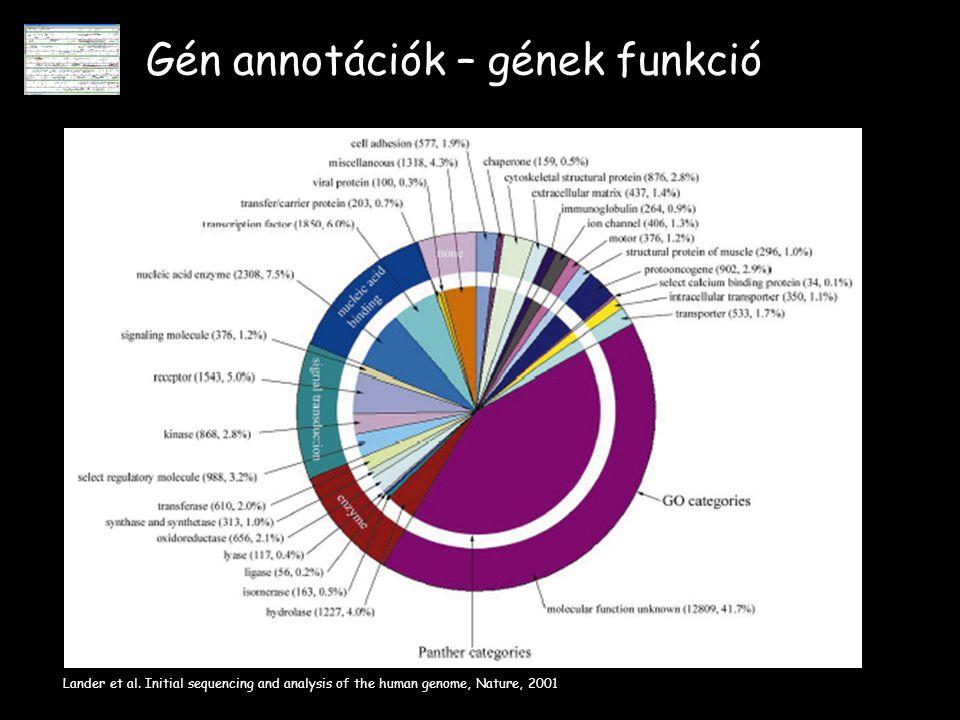 Gén annotációk – gének funkció