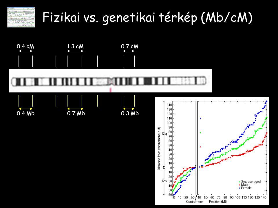 Fizikai vs. genetikai térkép (Mb/cM)
