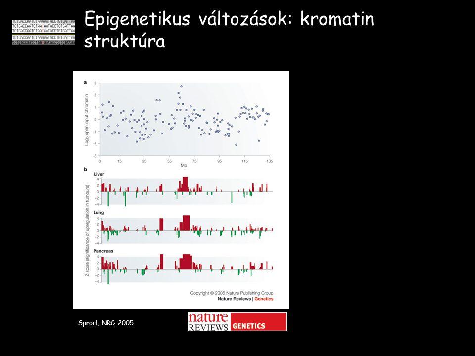Epigenetikus változások: kromatin struktúra