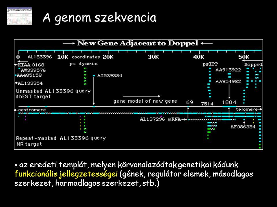 A genom szekvencia