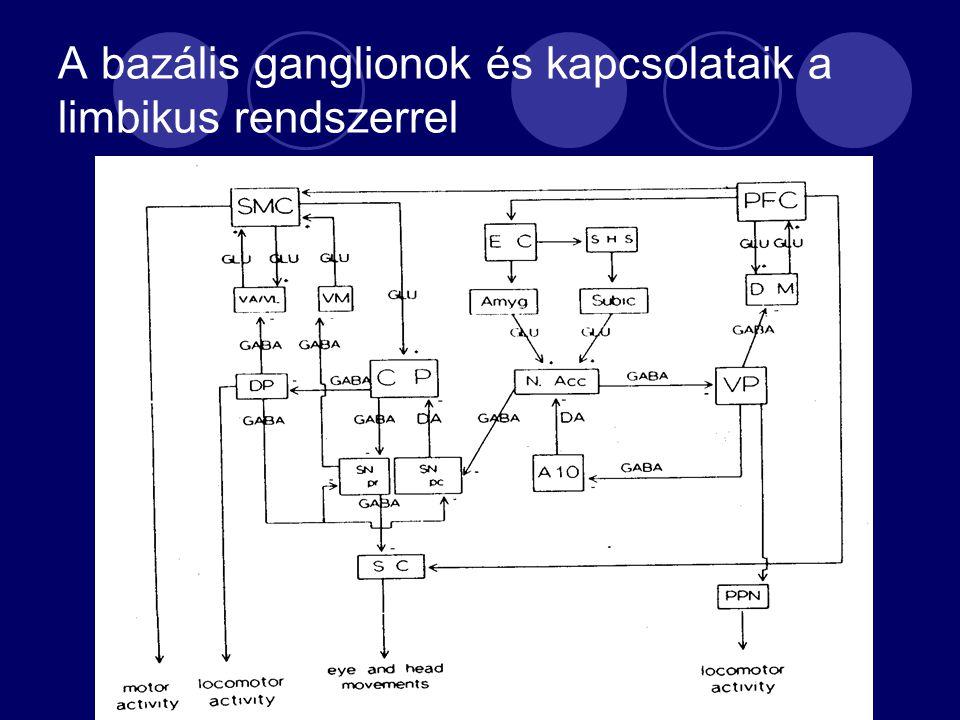 A bazális ganglionok és kapcsolataik a limbikus rendszerrel