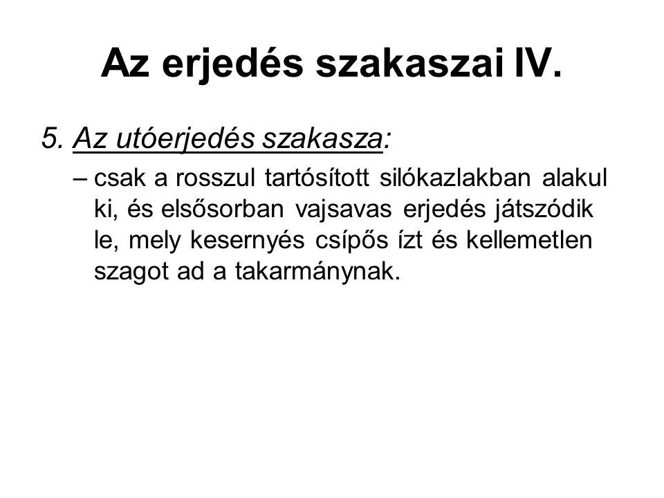 Az erjedés szakaszai IV.