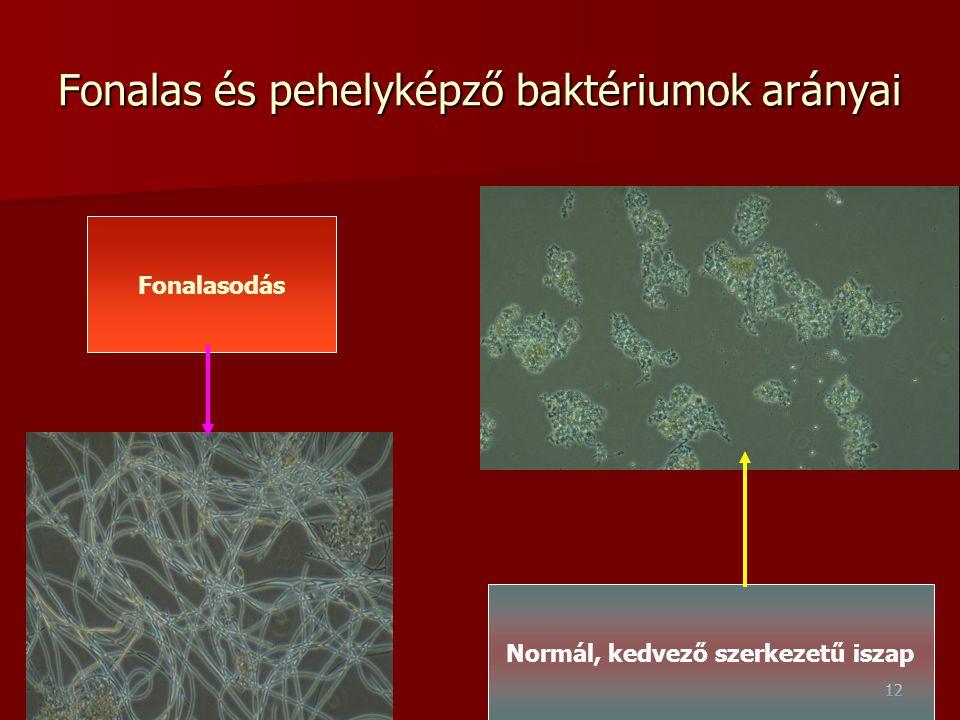 Fonalas és pehelyképző baktériumok arányai