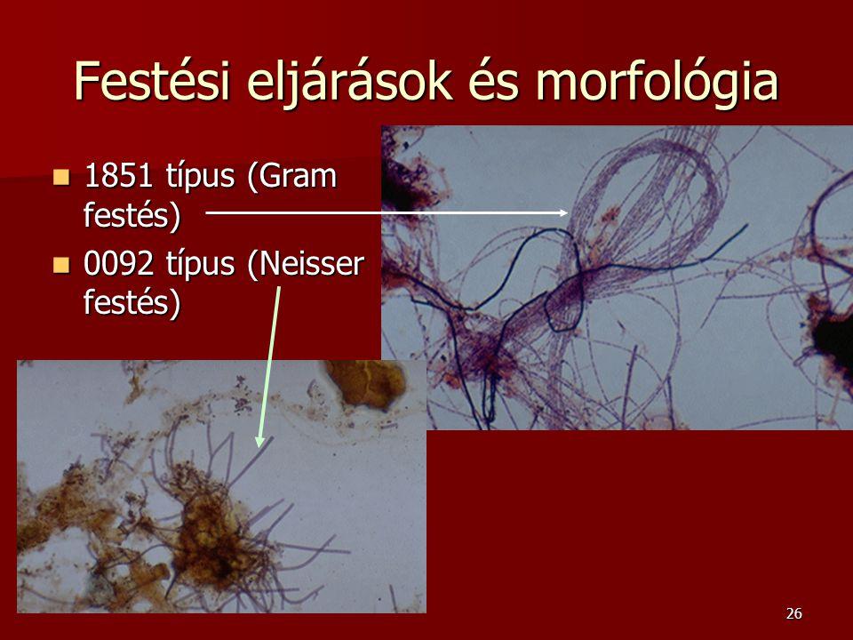 Festési eljárások és morfológia