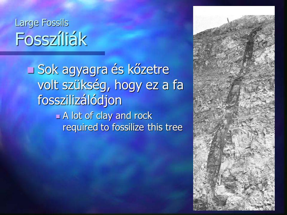Large Fossils Fosszíliák