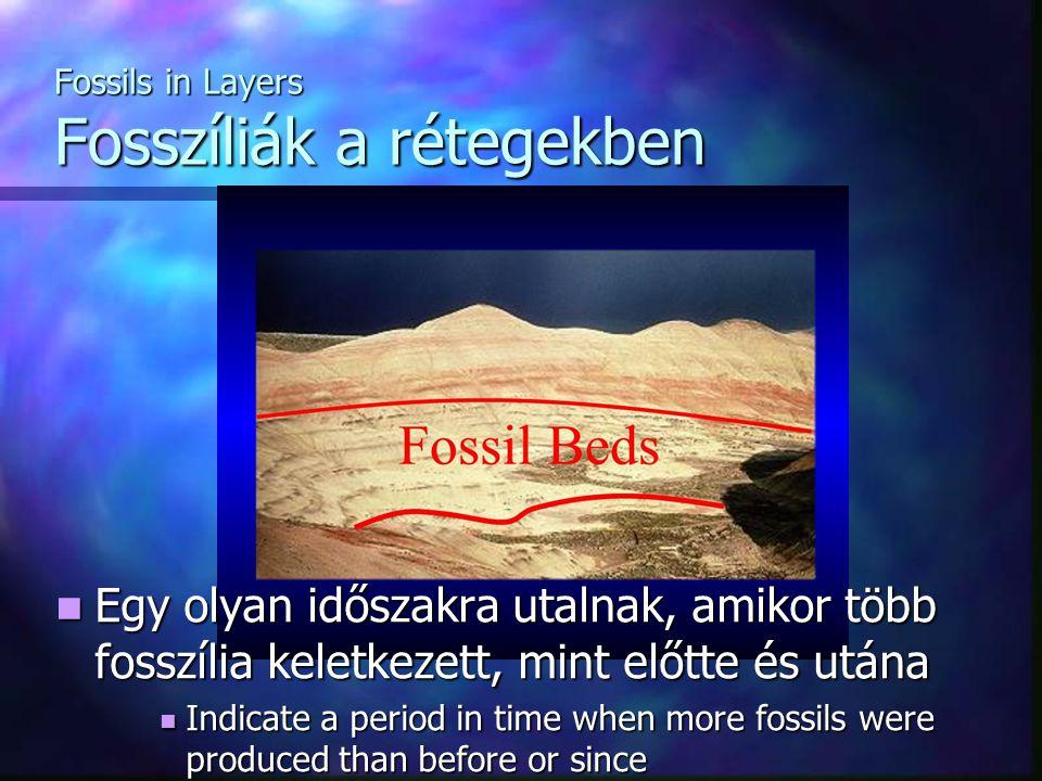 Fossils in Layers Fosszíliák a rétegekben