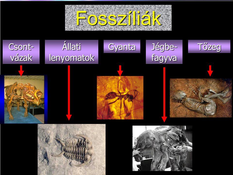 Fosszíliák Fossil Types Csont-vázak Állati lenyomatok Gyanta Jégbe-