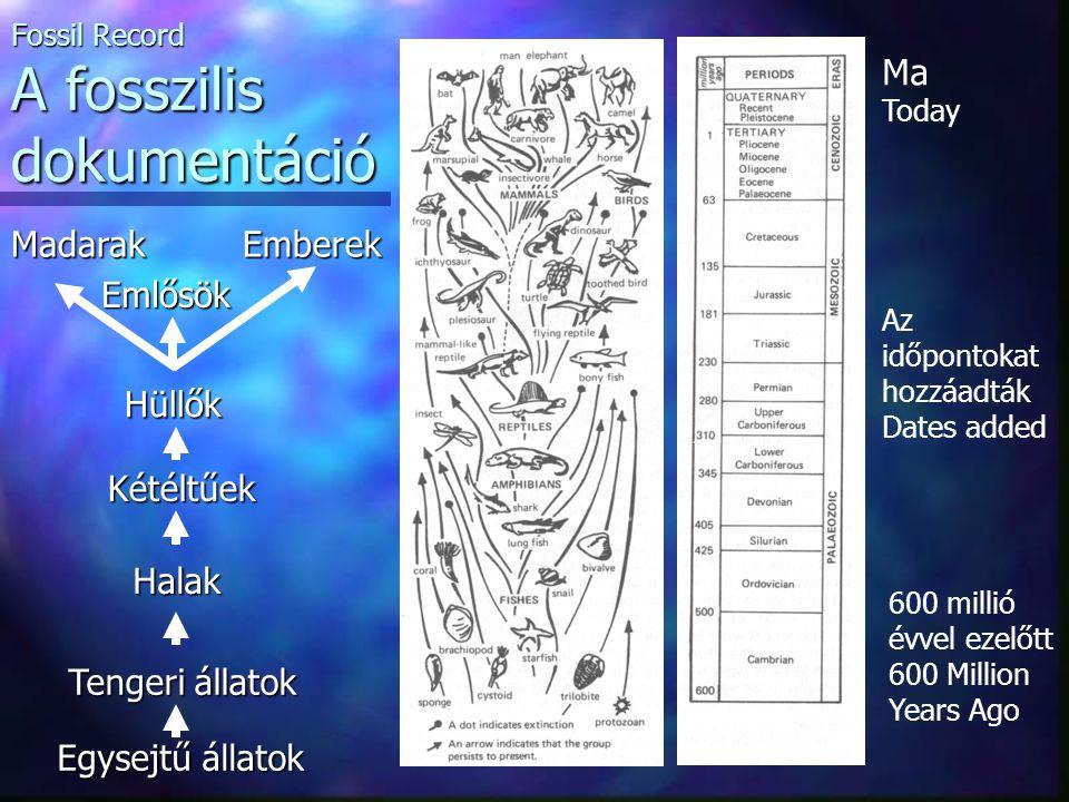 Fossil Record A fosszilis dokumentáció
