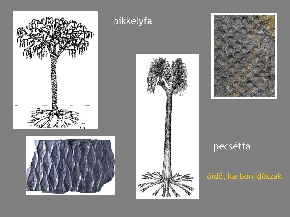 pikkelyfa pecsétfa óidő, karbon időszak
