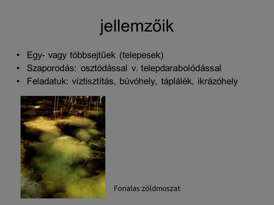 jellemzőik Egy- vagy többsejtűek (telepesek)