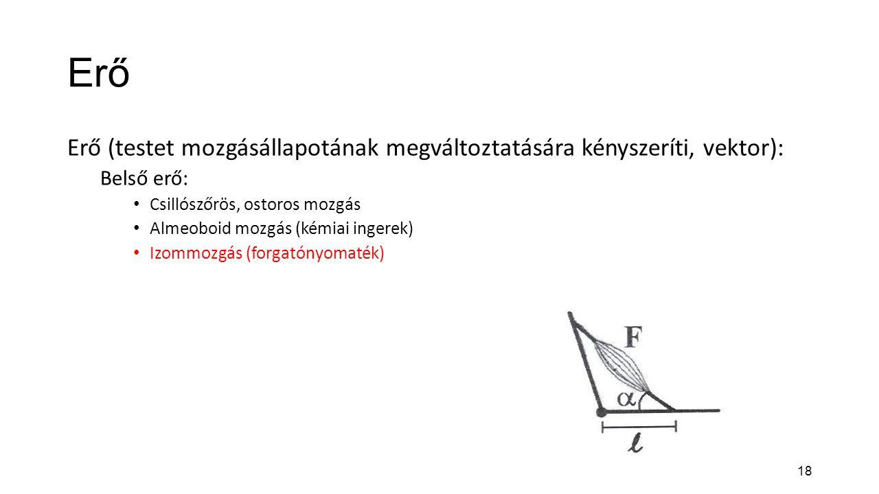 Erő Erő (testet mozgásállapotának megváltoztatására kényszeríti, vektor): Belső erő: Csillószőrös, ostoros mozgás.