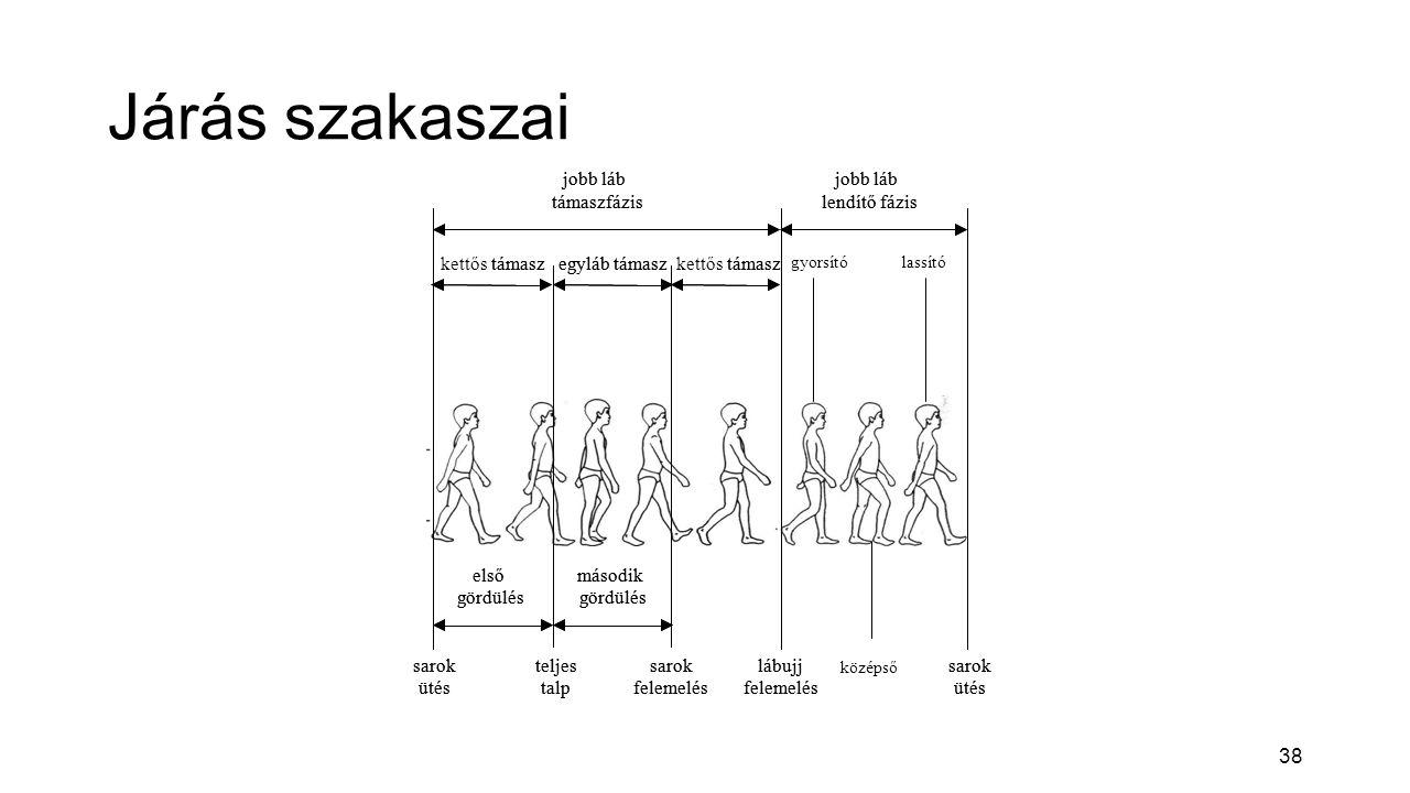 Járás szakaszai kettős támasz jobb láb lendítő fázis támaszfázis