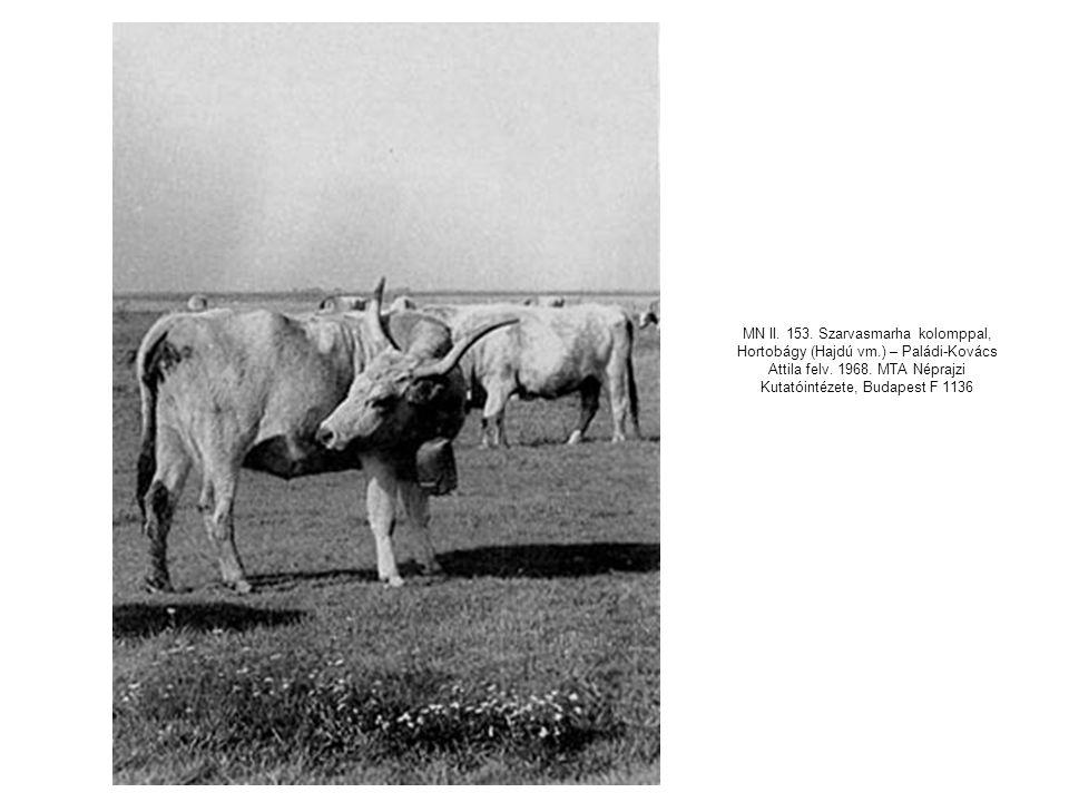 MN II. 153. Szarvasmarha kolomppal, Hortobágy (Hajdú vm