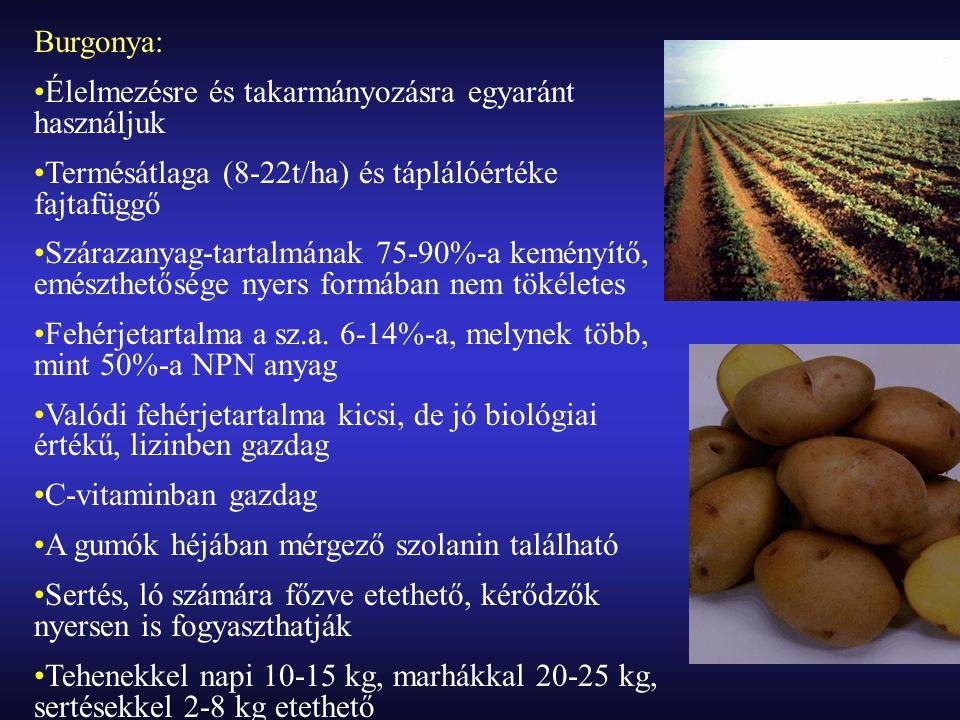 Burgonya: Élelmezésre és takarmányozásra egyaránt használjuk. Termésátlaga (8-22t/ha) és táplálóértéke fajtafüggő.