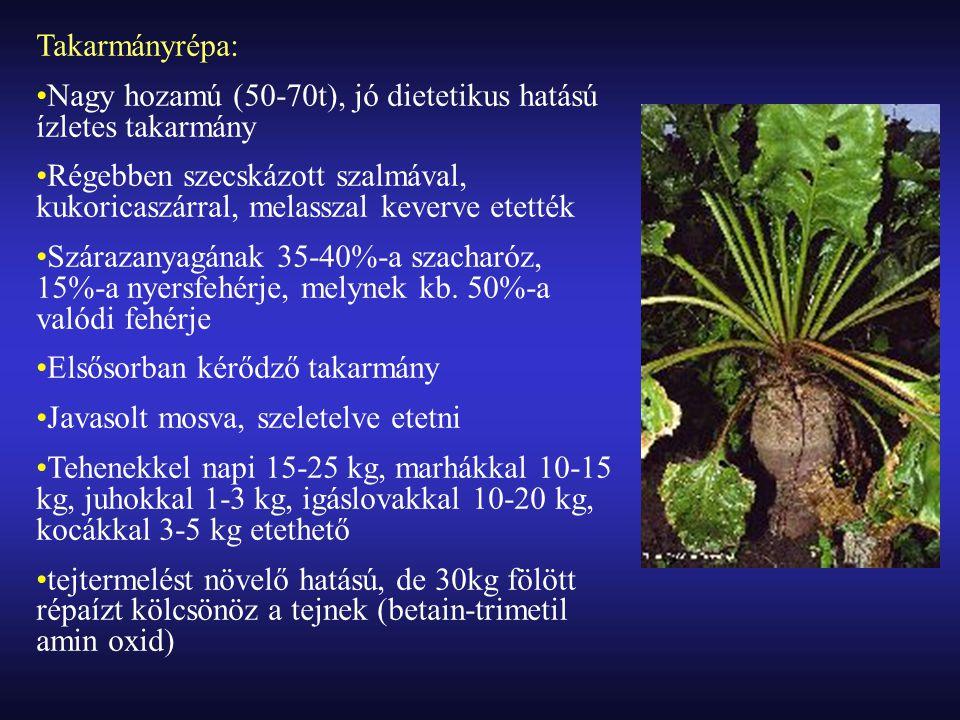 Takarmányrépa: Nagy hozamú (50-70t), jó dietetikus hatású ízletes takarmány.