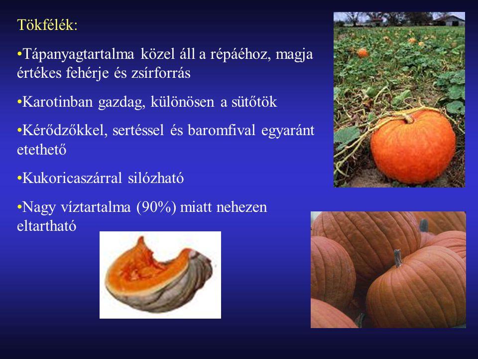 Tökfélék: Tápanyagtartalma közel áll a répáéhoz, magja értékes fehérje és zsírforrás. Karotinban gazdag, különösen a sütőtök.