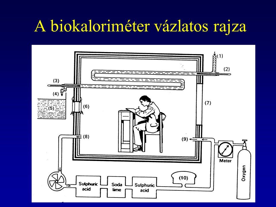 A biokaloriméter vázlatos rajza