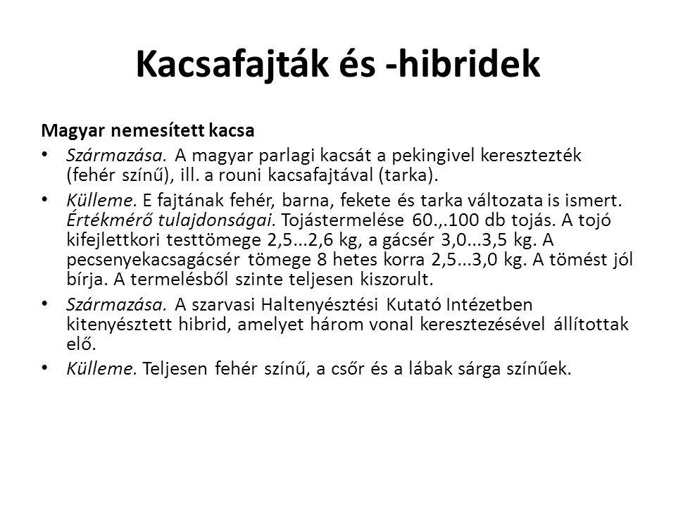 Kacsafajták és -hibridek