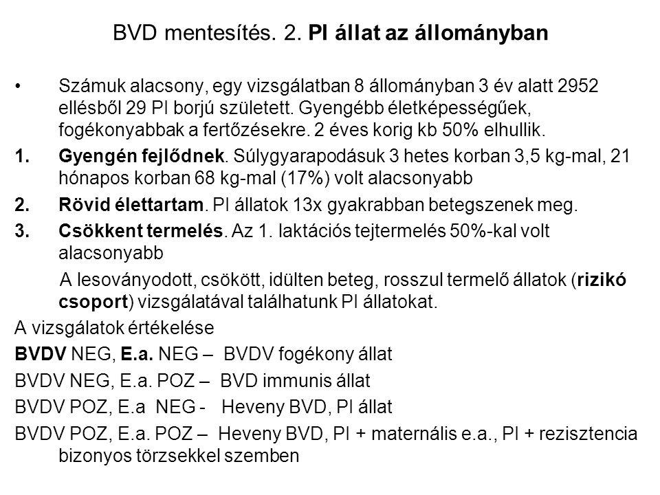 BVD mentesítés. 2. PI állat az állományban