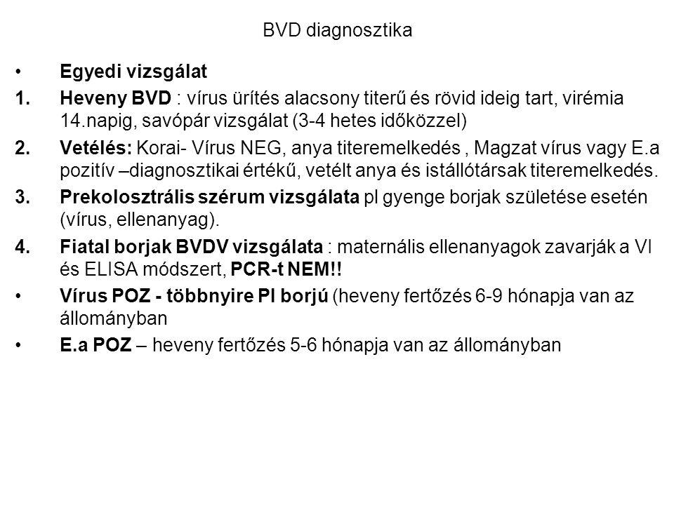 BVD diagnosztika Egyedi vizsgálat.