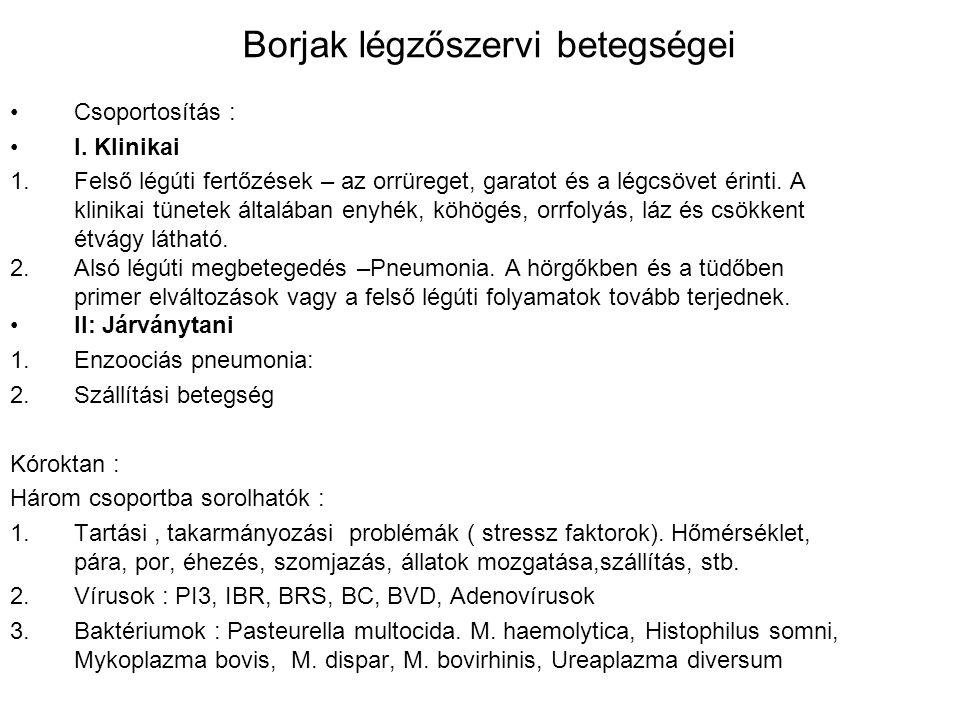 Borjak légzőszervi betegségei