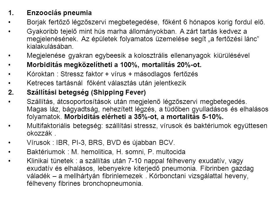 Enzoociás pneumia Borjak fertőző légzőszervi megbetegedése, főként 6 hónapos korig fordul elő.