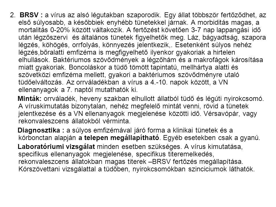 2. BRSV : a vírus az alsó légutakban szaporodik
