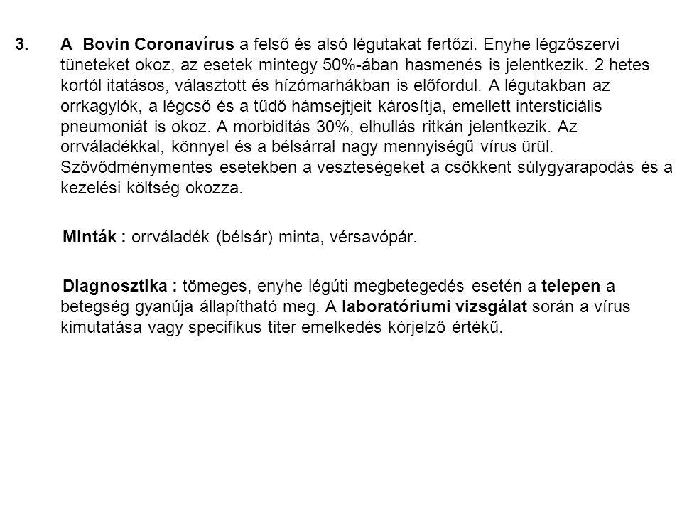 A Bovin Coronavírus a felső és alsó légutakat fertőzi