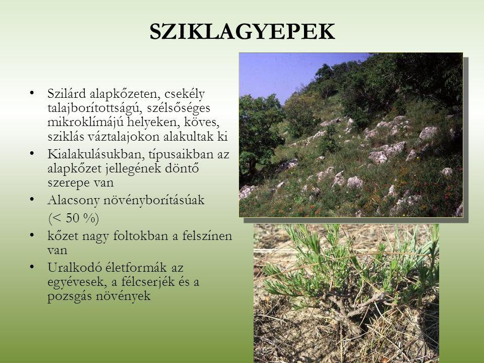SZIKLAGYEPEK Szilárd alapkőzeten, csekély talajborítottságú, szélsőséges mikroklímájú helyeken, köves, sziklás váztalajokon alakultak ki.