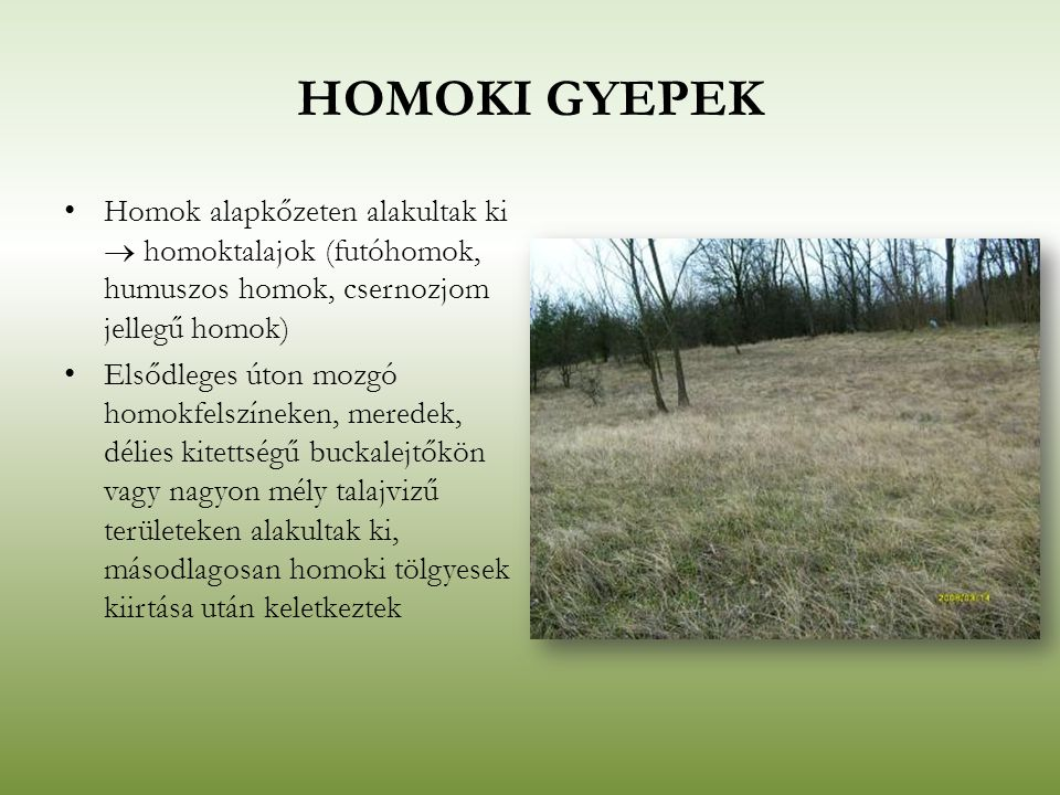 HOMOKI GYEPEK Homok alapkőzeten alakultak ki  homoktalajok (futóhomok, humuszos homok, csernozjom jellegű homok)