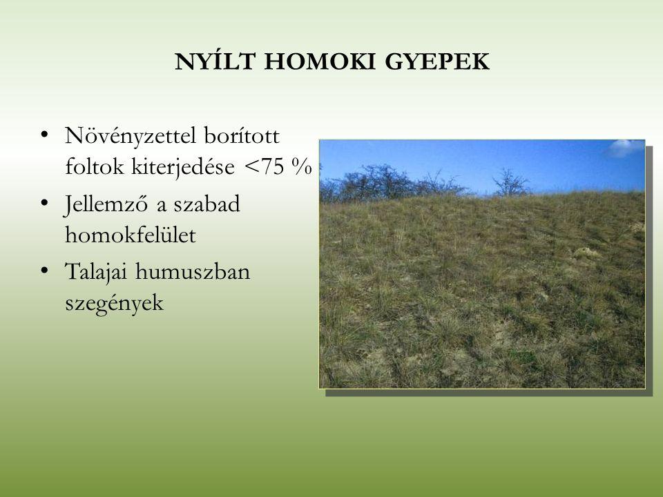 NYÍLT HOMOKI GYEPEK Növényzettel borított foltok kiterjedése <75 % Jellemző a szabad homokfelület.