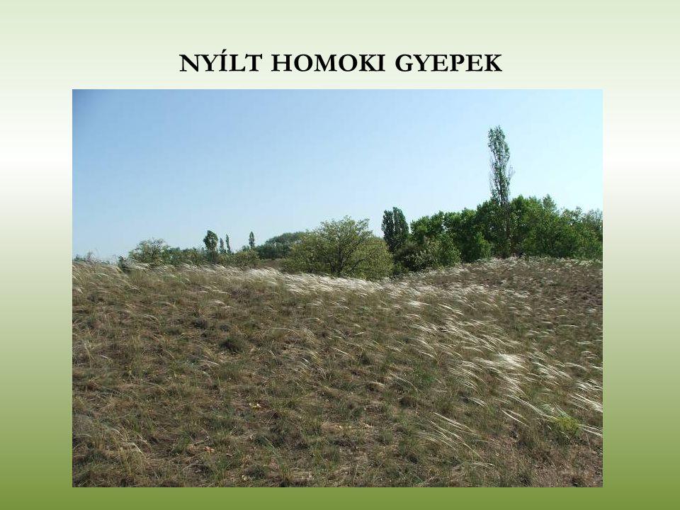 NYÍLT HOMOKI GYEPEK
