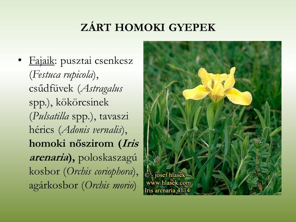 ZÁRT HOMOKI GYEPEK