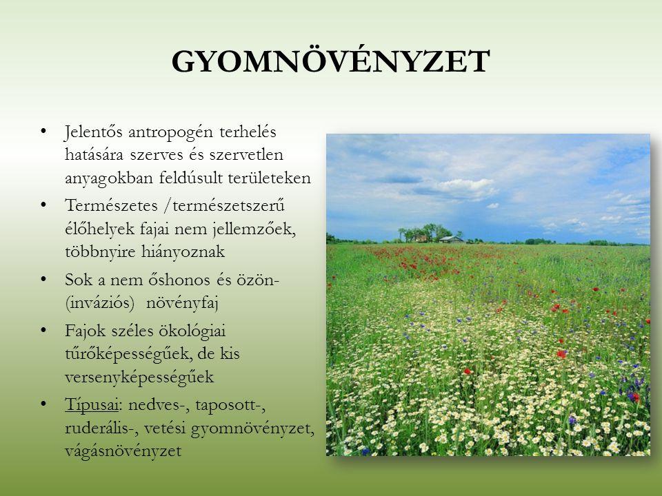 Gyomnövényzet Jelentős antropogén terhelés hatására szerves és szervetlen anyagokban feldúsult területeken.