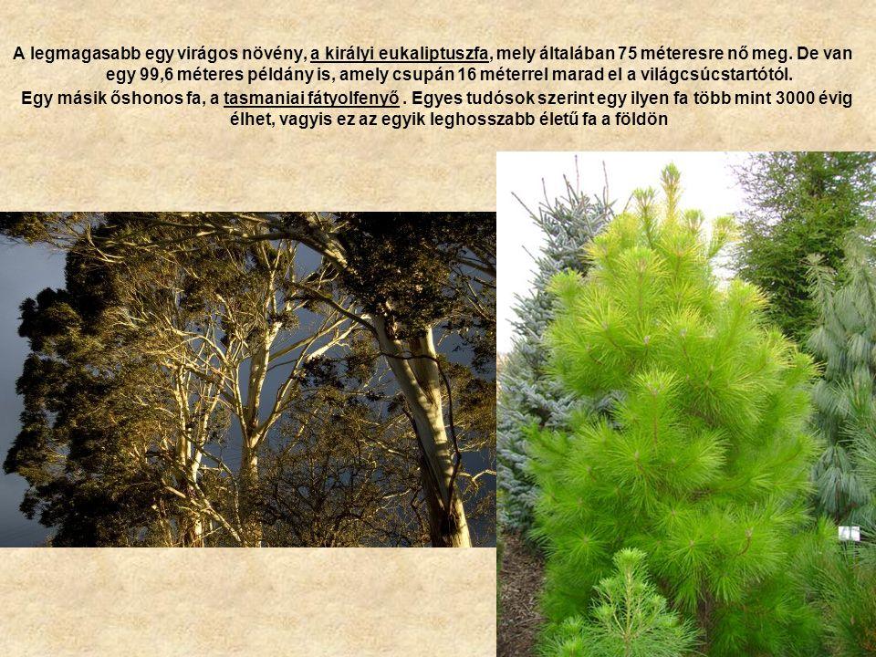 A legmagasabb egy virágos növény, a királyi eukaliptuszfa, mely általában 75 méteresre nő meg. De van egy 99,6 méteres példány is, amely csupán 16 méterrel marad el a világcsúcstartótól.