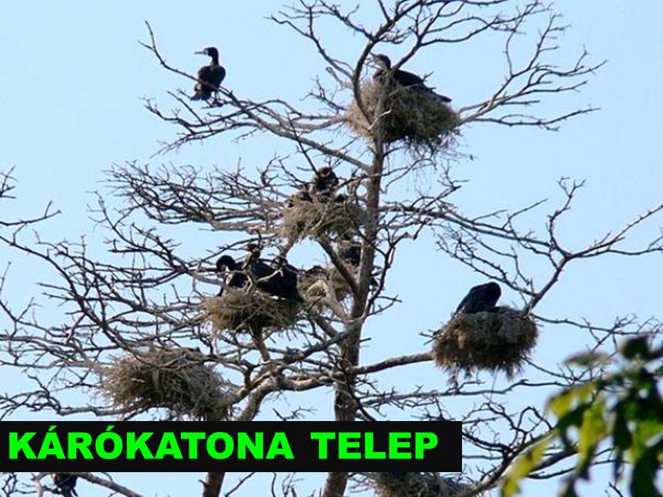 KÁRÓKATONA TELEP