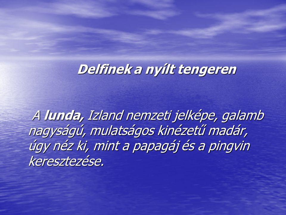 Delfinek a nyílt tengeren A lunda, Izland nemzeti jelképe, galamb nagyságú, mulatságos kinézetű madár, úgy néz ki, mint a papagáj és a pingvin keresztezése.
