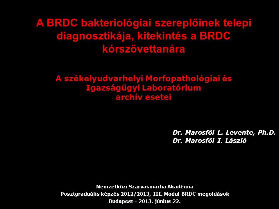 A BRDC bakteriológiai szereplőinek telepi diagnosztikája, kitekintés a BRDC kórszövettanára