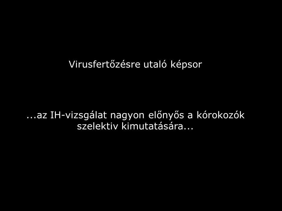 Virusfertőzésre utaló képsor