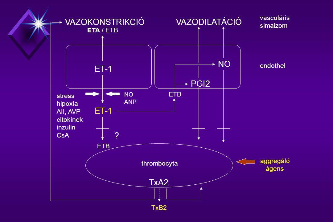 VAZOKONSTRIKCIÓ VAZODILATÁCIÓ NO ET-1 PGI2 ET-1 TxA2 vasculáris