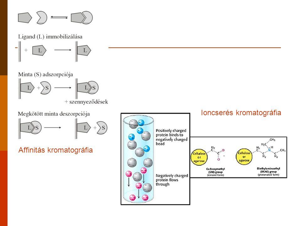 Ioncserés kromatográfia