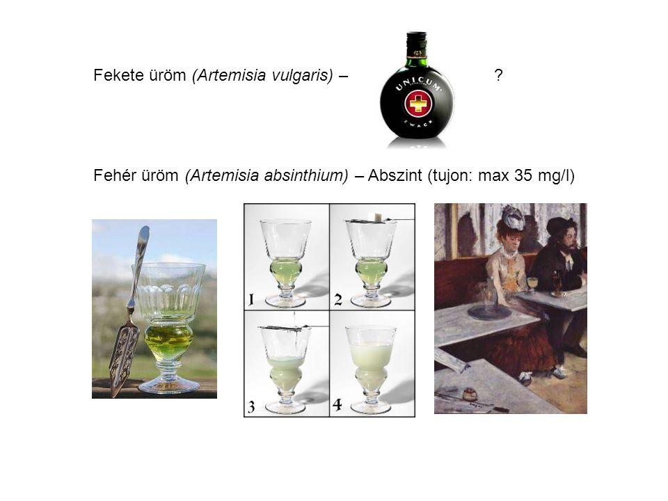 Fekete üröm (Artemisia vulgaris) –