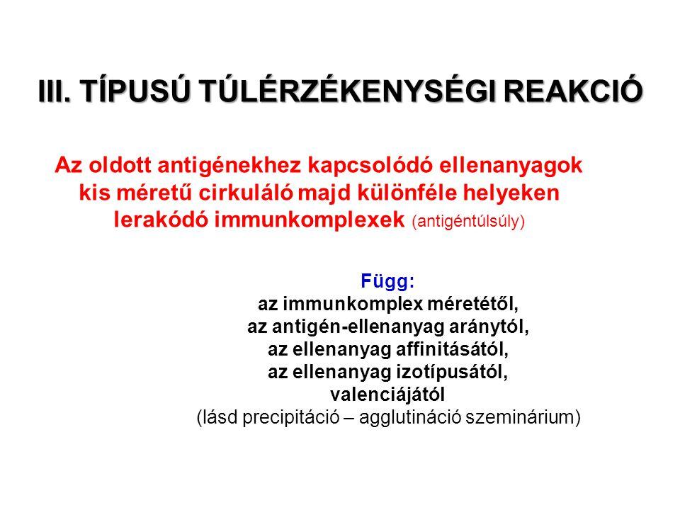 III. TÍPUSÚ TÚLÉRZÉKENYSÉGI REAKCIÓ