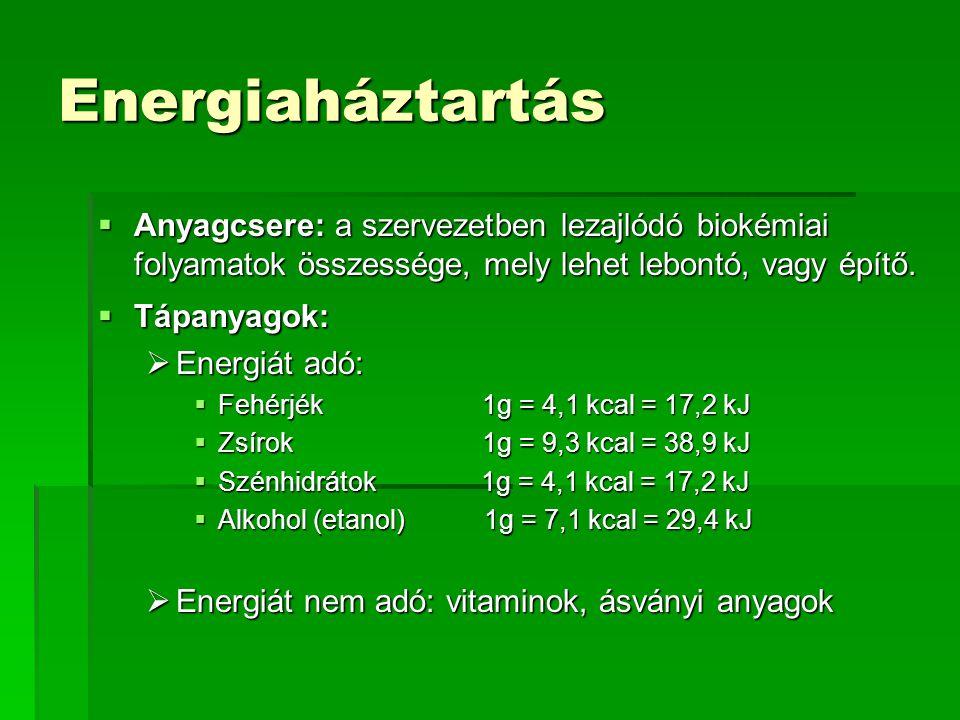 Energiaháztartás Anyagcsere: a szervezetben lezajlódó biokémiai folyamatok összessége, mely lehet lebontó, vagy építő.