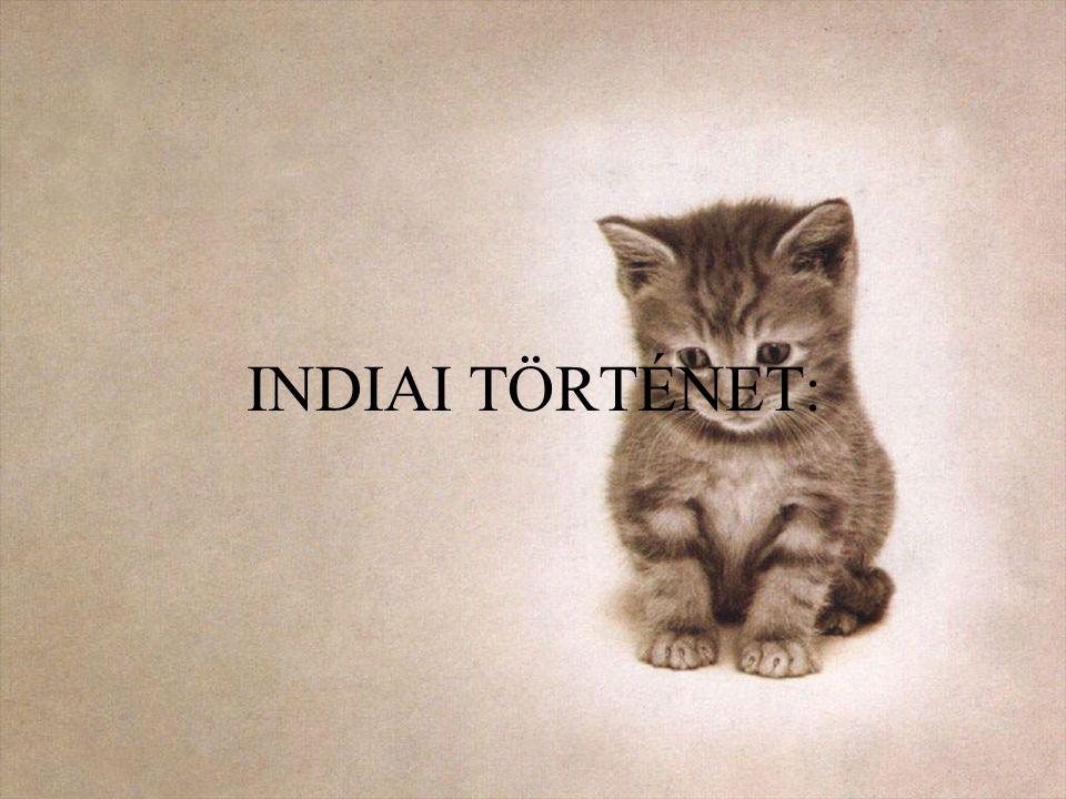 INDIAI TÖRTÉNET: