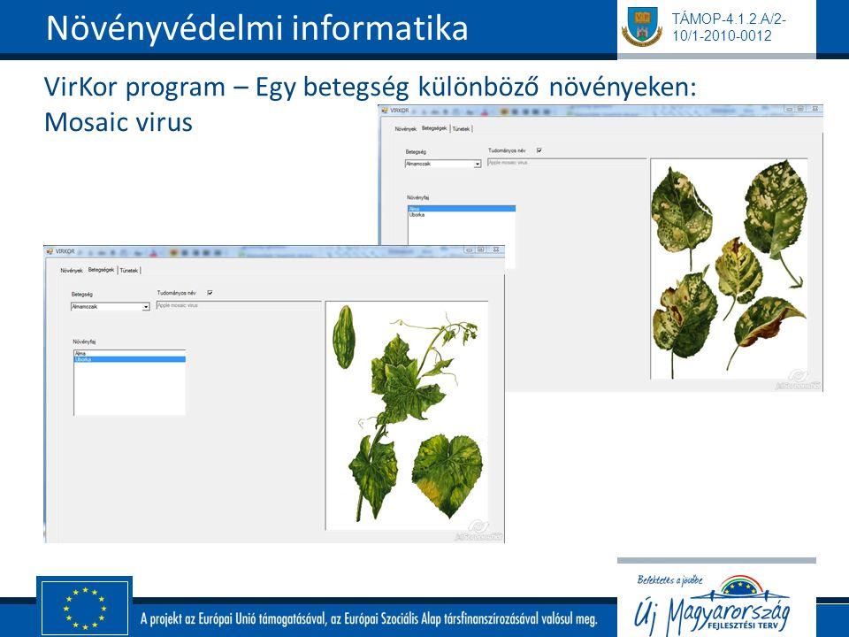 VirKor program – Egy betegség különböző növényeken: Mosaic virus