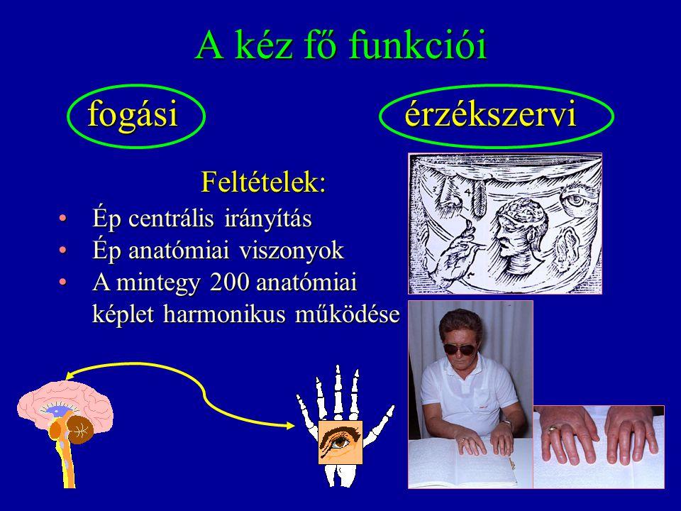 A kéz fő funkciói fogási érzékszervi Feltételek: