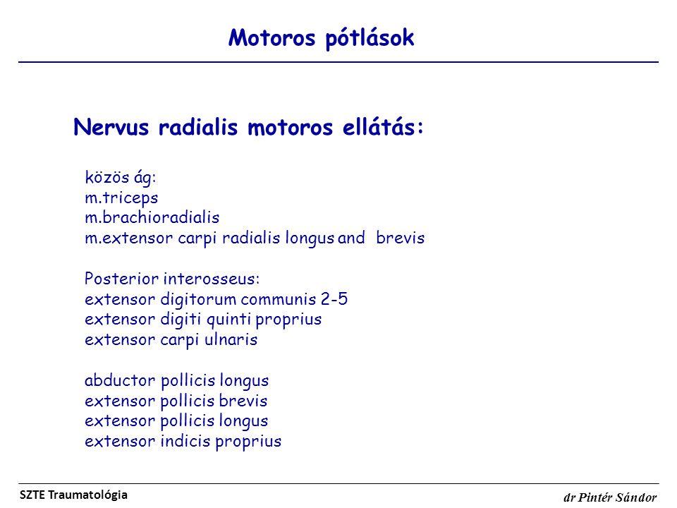 Nervus radialis motoros ellátás: