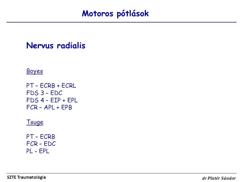 Nervus radialis Motoros pótlások Boyes PT – ECRB + ECRL FDS 3 – EDC