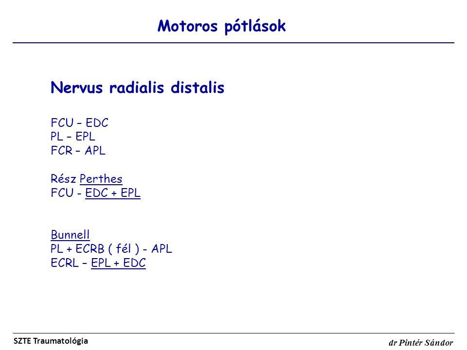 Nervus radialis distalis